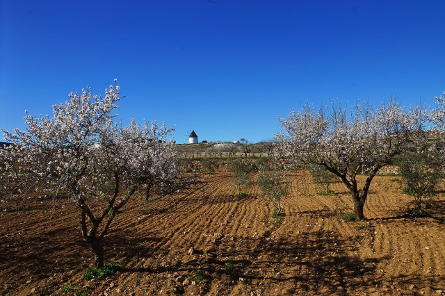 Almond groves